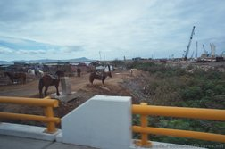 Horses off to the side of the road in Ensenada.jpg