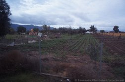 Vegetable farm in Ensenada.jpg