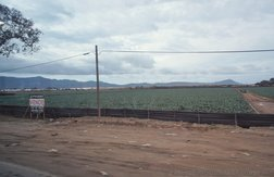 Asparagus Farm in Ensenada.jpg